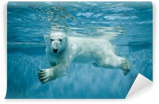Vinylová Fototapeta Plavání Thalarctos maritimus (Ursus maritimus) - Lední medvěd