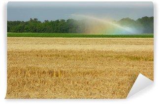 Fototapeta Winylowa Podlewanie pola pszenicy