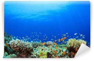 Vinylová Fototapeta Podvodní Coral Reef a tropické ryby