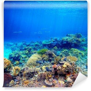 Vinylová Fototapeta Podvodní scény. Korálový útes, barevné ryby a slunečné oblohy shinin