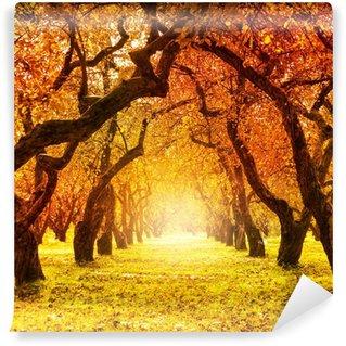 Vinylová Fototapeta Podzim. Fall. Podzimní park