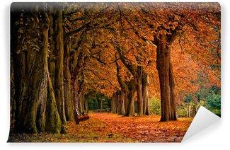 Vinylová Fototapeta Podzimní barvy v lese