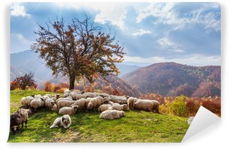 Vinylová Fototapeta Podzimní krajina, ovce, pes Shepard