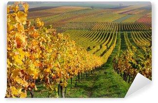 Vinylová Fototapeta Podzimní krajina vinice v údolí Rýna, Německo
