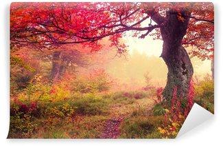 Vinylová Fototapeta Podzimní les