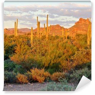 Vinylová Fototapeta Pohled na arizonské poušti poblíž Phoenixu při západu slunce