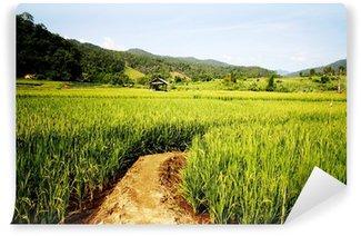 Fototapeta Winylowa Pola ryżowego