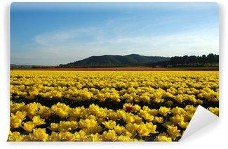 Fototapeta Winylowa Pola tulipanów w Prowansji