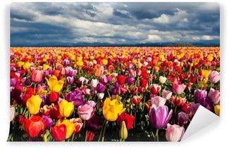 Fototapeta Vinylowa Pola tulipanów