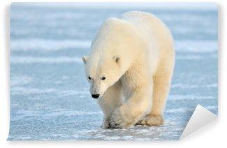 Vinylová Fototapeta Polar Bear chůzi na modrém ledu.