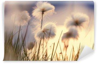 Vinylová Fototapeta Polární květiny