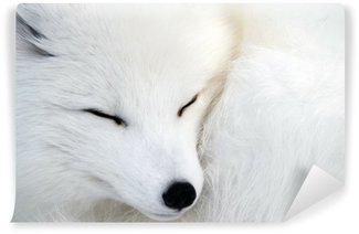 Vinylová Fototapeta Polární liška