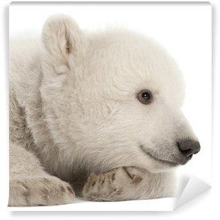 Vinylová Fototapeta Polární medvídě, Ursus maritimus, 3 měsíce starý, ležící