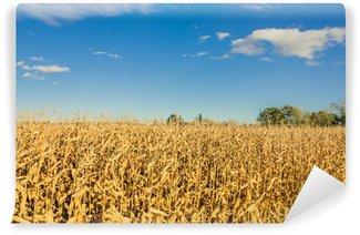 Fototapeta Vinylowa Pole kukurydzy
