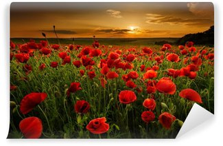 Fototapeta Winylowa Pole makowe o zachodzie słońca