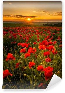 Fototapeta Vinylowa Pole makowe o zachodzie słońca