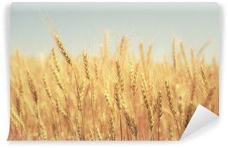 Fototapeta Winylowa Pole pszenicy