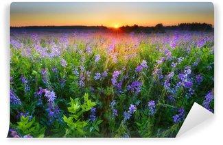 Fototapeta Vinylowa Pole z fioletowych kwiatów na wschód słońca