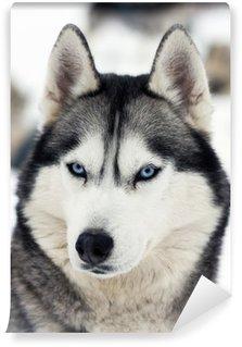 Fototapeta Vinylowa Portret husky