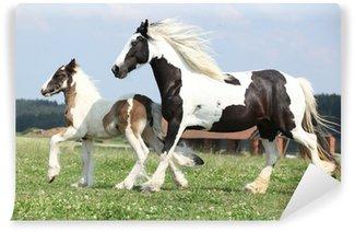 Vinylová Fototapeta Portrét krásné arabského koně