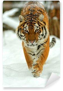 Vinylová Fototapeta Portrét sibiřského tygra