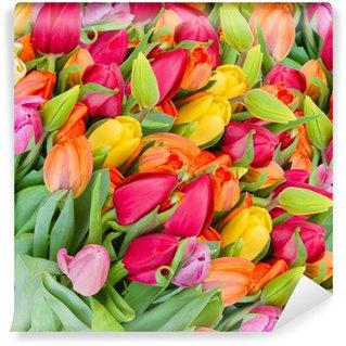 Vinylová Fototapeta Pozadí jarní tulipány