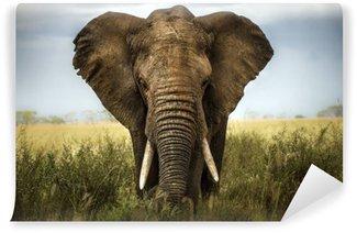Vinylová Fototapeta Pozadí slon