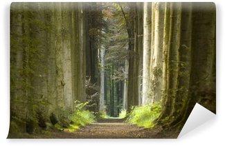 Vinylová Fototapeta Příroda cesta