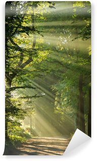Fototapeta Winylowa Promienie słońca świecące przez drzewa w las.