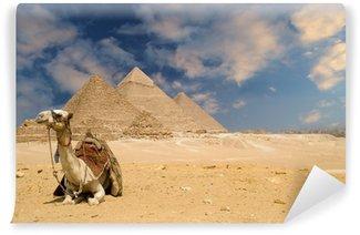 Vinylová Fototapeta Pyramidy velbloud