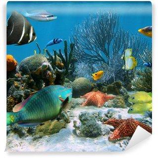 Fototapeta Winylowa Rafa koralowa i rozgwiazdy