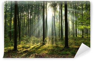 Vinylová Fototapeta Ráno v lese