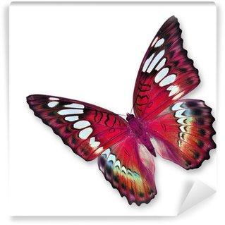 Fototapeta Vinylowa Red butterfly