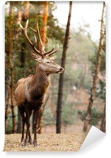 Vinylová Fototapeta Red deer jelen v podzimním lese podzim