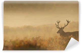 Vinylová Fototapeta Red Deer Stag v mlze