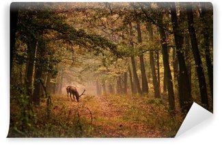 Vinylová Fototapeta Red deer v lese