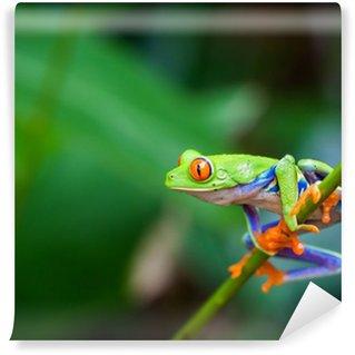 Fototapeta Winylowa Red eye frog