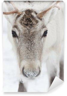 Vinylová Fototapeta Reindeer portrét