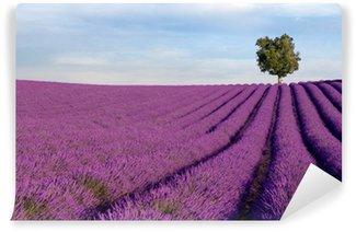 Vinylová Fototapeta Rich levandule pole v Provence s Lone Tree