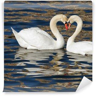 Vinylová Fototapeta Romantické labutě na jaře.