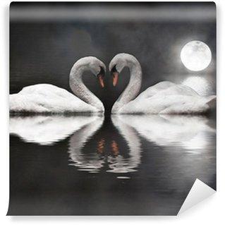 Vinylová Fototapeta Romantický labuť během Valentýna