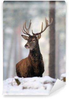 Fototapeta Winylowa Rothirsch, Rotwild, Winter