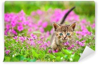 Vinylová Fototapeta Rozkošný tabby kotě květiny