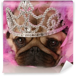 Vinylová Fototapeta Rozmazlený pes - rozkošný mops oblečená jako princezna