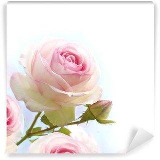 Fototapeta Winylowa Różowa róża na niebieskim białym tle