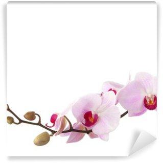 Fototapeta Winylowa Różowy Orchidea samodzielnie na białym tle