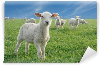 Vinylová Fototapeta Roztomilé ovečky