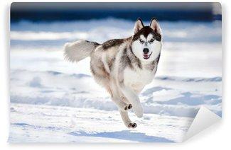 Vinylová Fototapeta Roztomilý pes hasky běží v zimě