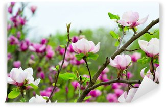 Vinylová Fototapeta Růžové magnolie