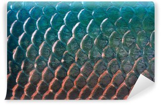 Fototapeta Vinylowa Ryby skala tekstury dla tła, kolorowe koncepcji